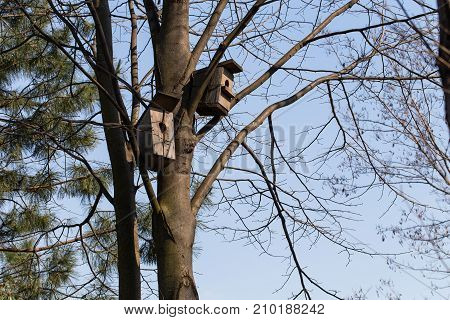 Nesting boxes on a tree.  Photo can be used as a whole background.