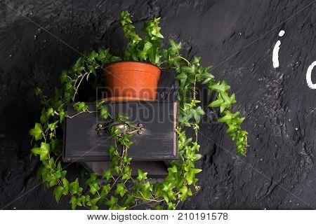 House plant on a handmade shelf. Still life.