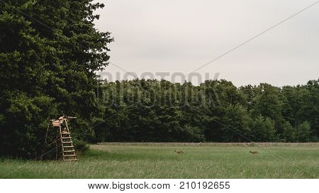 young man observing two deers on a forest glade