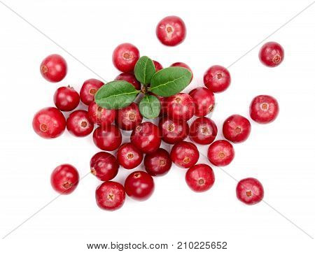 Cranberry with leaf isolated on white background closeup top view.