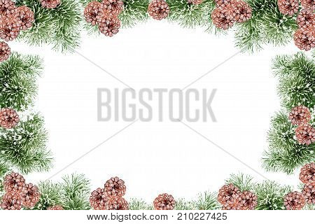 The branches of the snow covered Christmas tree on a white background. Pine cones.