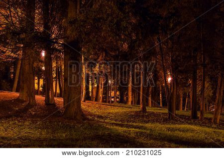 Night view of many trees with dense crowns in the illuminated park Sochi Russia