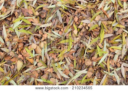 Background of birch and willow fallen leaves. Colorless and dirty.
