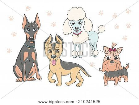 Cute set of funny purebred dogs - poodle, doberman, german shepherd, yorkshire terrier on a white background. Vector illustration in cartoon style