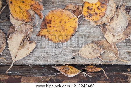 Fallen Leaves With White Frost Lay On Wood