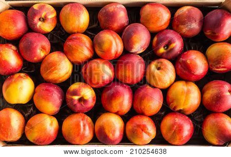 bunch of juicy delicious red yellow peaches prunus persica in box at the market poster