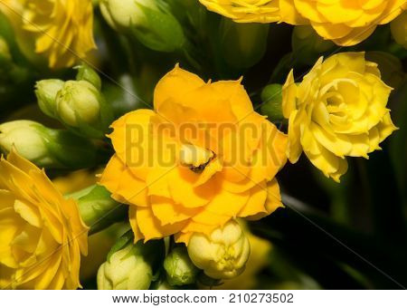 beautiful background of yellow flower . In the park in nature
