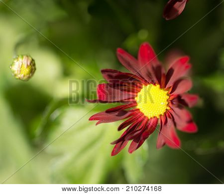 background of beautiful flowers . In the park in nature
