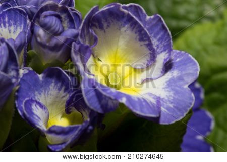 beautiful blue flower . In the park in nature