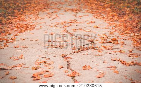 Track for running in the park. Autumn in a park