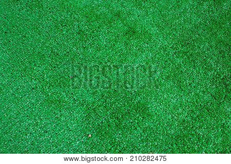 green grass texture. View from the top