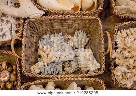Same Type Of Sea Shells Collected