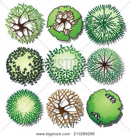 Set of trees and shrubs color. Top view. use in your landscape design.vector illustration