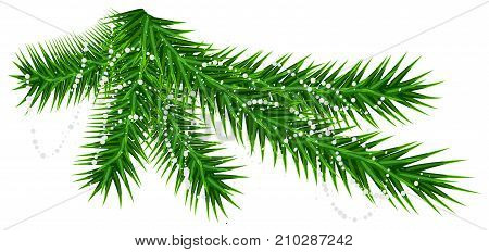 Green pine fir branch and rare snow snowflake. Christmas vector illustration isolated on white