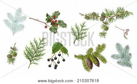 Vector realistic illustrations set of winter forest branches isolated on white background. Winter design element collection for christmas, new year, winter holidays