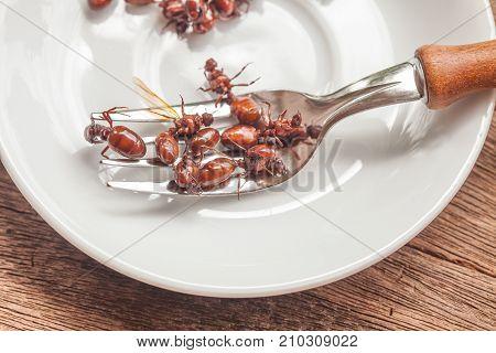 Subterranean Ants Roast Is Clean Food In Local Cuisine Of Thai, Northern Style Food, Lanna Style Foo