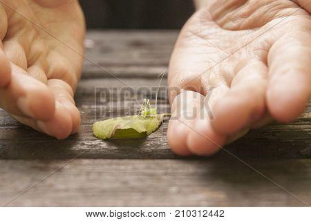 It is image of drumming katydid in the garden