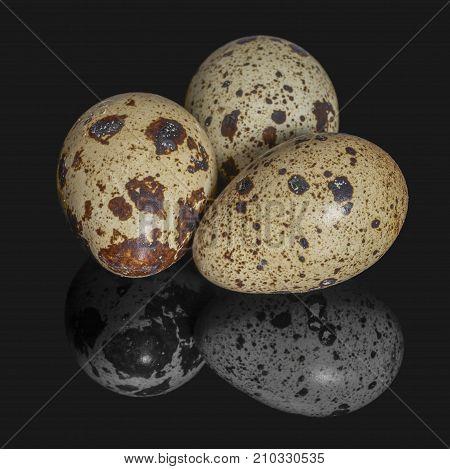 three brown dappled quail eggs on dark reflective back