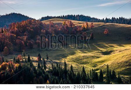 Deciduous Forest On Hillside In Autumn Sunrise