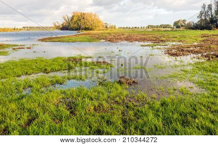 Flooded nature area in a Dutch polder. It is a cloudy day in the fall season.