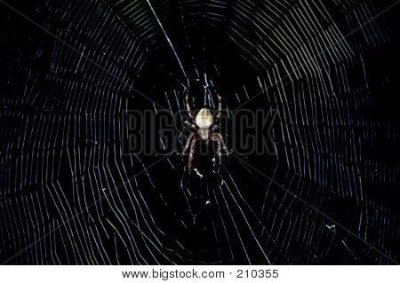Spider In The Dark