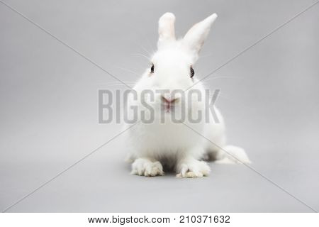 Adorable Frendly White Rabbit On A Seamless Light Background