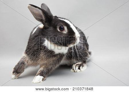 Cute White Baby Bunny Rabbit On A Seamless Light Background