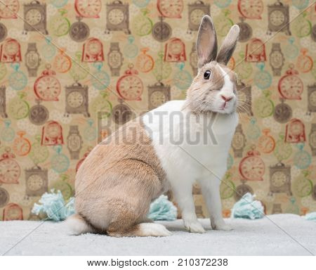 Curious Little Funny Bunny Looks Cheerfully Tilting The Head To A Side