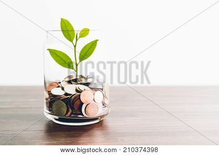 Coins in a bottle and the green tree Represents the financial growth. The more money you save the more you will get.