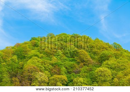 Blue cloudy sky over the mountain top with thicket of trees in sunny summer day