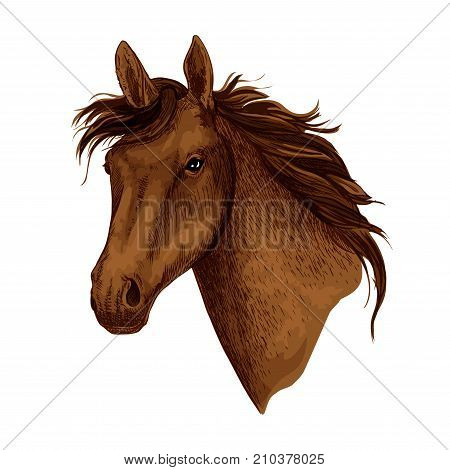 Horse or brown mustang head with wavy mane. Wild equine animal muzzle or racehorse trotter for sport team mascot or stallion for equestrian contest or horse races and exhibition. Vector isolated icon