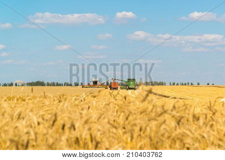 Agricultural machinery removes grain crops on the field in Russia