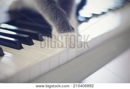 Paws of a gray cat on synthesizer keys.