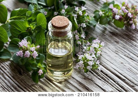 A Bottle Of Oregano Essential Oil On White Painted Wood