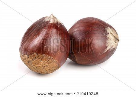 fresh edible chestnut isolated on white background.