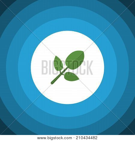 Foliage Vector Element Can Be Used For Hickory, Foliage, Leaf Design Concept.  Isolated Hickory Flat Icon.