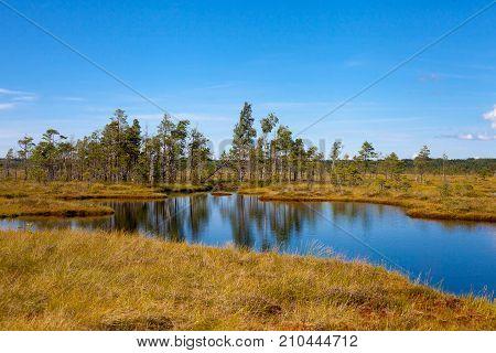 Beautiful Swamp Landscape
