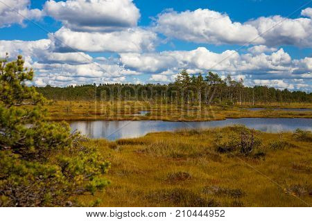 Long Pond In The Swamp