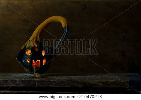 Rotten mutant jack o lantern made from winged gourd pumpkin, which has spikes and wings. Evil looking and spewing rotten pumpkin. black color on bottom half is its natural color. Nails sticking out.