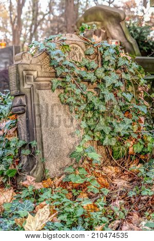 Old forgotten tombstone covered with ivy