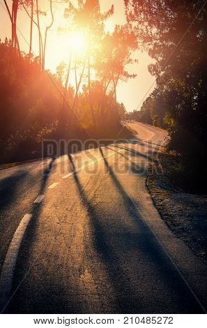 Curvy road in the woods at sunset light