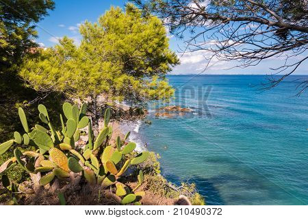 View Of The Cactus On The Costa Dorada Coast In Miami Playa, Tarragona, Catalonia, Spain. Close-up.