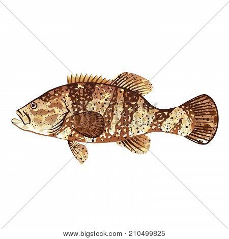 Goliath grouper game fish illustration clip-art eps