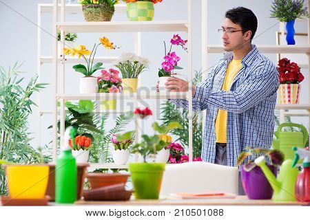 Gardener florist working in a flower shop with house plants