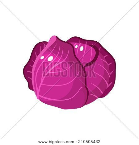 Vegetables. Scotch kale. Head of red cabbage. Vector illustration cartoon flat icon isolated on white.