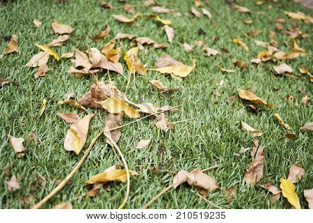 Dry leafs on the synthetic grass in autumn