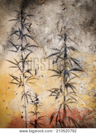 Shadows of Hemp or Cannabis plant on a grungy wall.