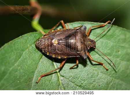 Bug on a leaf, Bill kerfe, bug, insect, nature