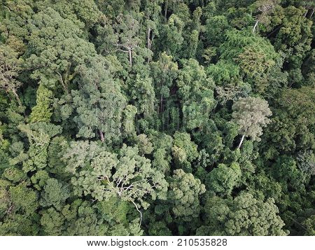 Tropical rainforest. Aerial photo of forest