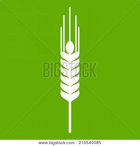 Stalk of ripe barley icon white isolated on green background. Vector illustration